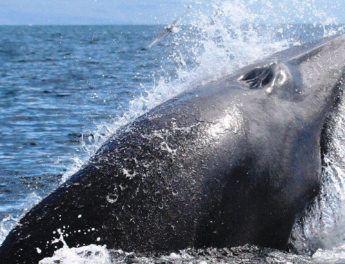 Only little bit longer for the Whales & Dolphins in 2020